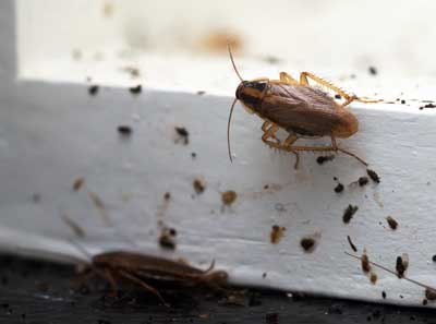 Learn the signs of a cockroach infestation with help from Rentokil in Southern Nevada
